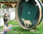 Chats chiens ,vidéo gag animaux