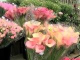 Blomsterforretning Kristiansand S Kaktus Blomsterhandel
