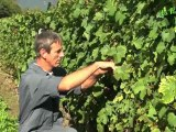 Vin du Bugey - Maison Guilland - La Panouille