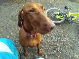 Descente en VTT avec sa chienne Amber