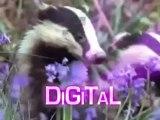 Funny animal video Voces y narrador Locuciones doblaje en ingles britanico en Madrid Edward Olive voice-overs Spain