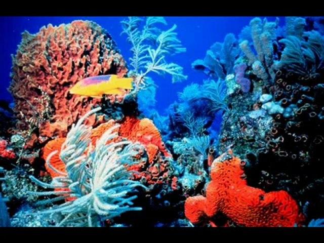 Pesci tropicali di mare