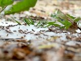 Ants 3 - Free HD stock footage