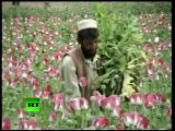 Marijuana as big as trees, miles of poppies - destroying it will kill the Afghan economy