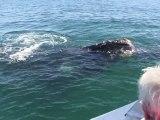 Argentine - Observation des baleines