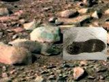 Un mulot mort dans le décor de la planète Mars de la Production NASA