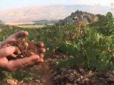 History of Lebanese Wine Industry: The Art of Wine-making in Lebanon