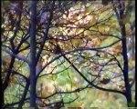 """Visite du Bois de Vincennes """" Vincennes terminus nature"""" un film de Laurent Wittmer"""