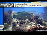 """""""Coup de Pouce pour la Planète, Les Seychelles, Une Seconde vie pour le Corail"""" Documentaire de Franck Fougère-Gnagni TV5Monde UnCoupDePoucePourLaPlanète"""