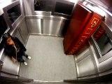 Cercueil dans un ascenseur (Caméra cachée)