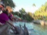 Dolphin attack: Shocking video of animal attacking a child