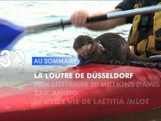 Sommaire émission 30 Millions d'Amis 8/12/2012