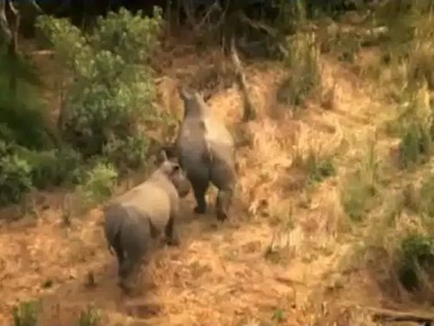 Save the Rhino song