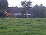 galOp des chevaux