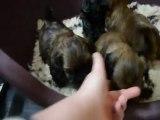 Bébés Fiona 1 mois !