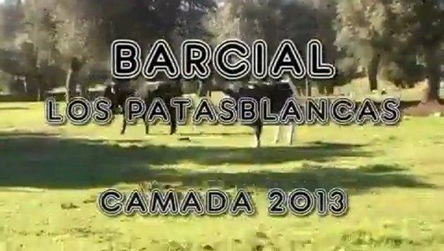 Barcial. Los Patasblancas - Camada 2013