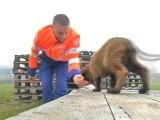 Focus: un élevage de chiens de recherche