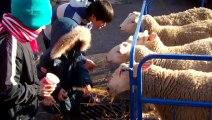 Fun feeding sheep at a Christmas Party held by World Vision Gifts