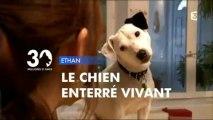 Reportage sur ETHAN, chien enterré vivant (30 millions d'amis)
