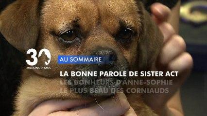 Sommaire émission 30 Millions d'Amis 22/12/2012