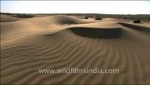1538.Sam Sand dunes in Desert National Park, Jaisalmer, Rajasthan.mov
