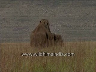 Elephant sex in the Himalayan foothills...