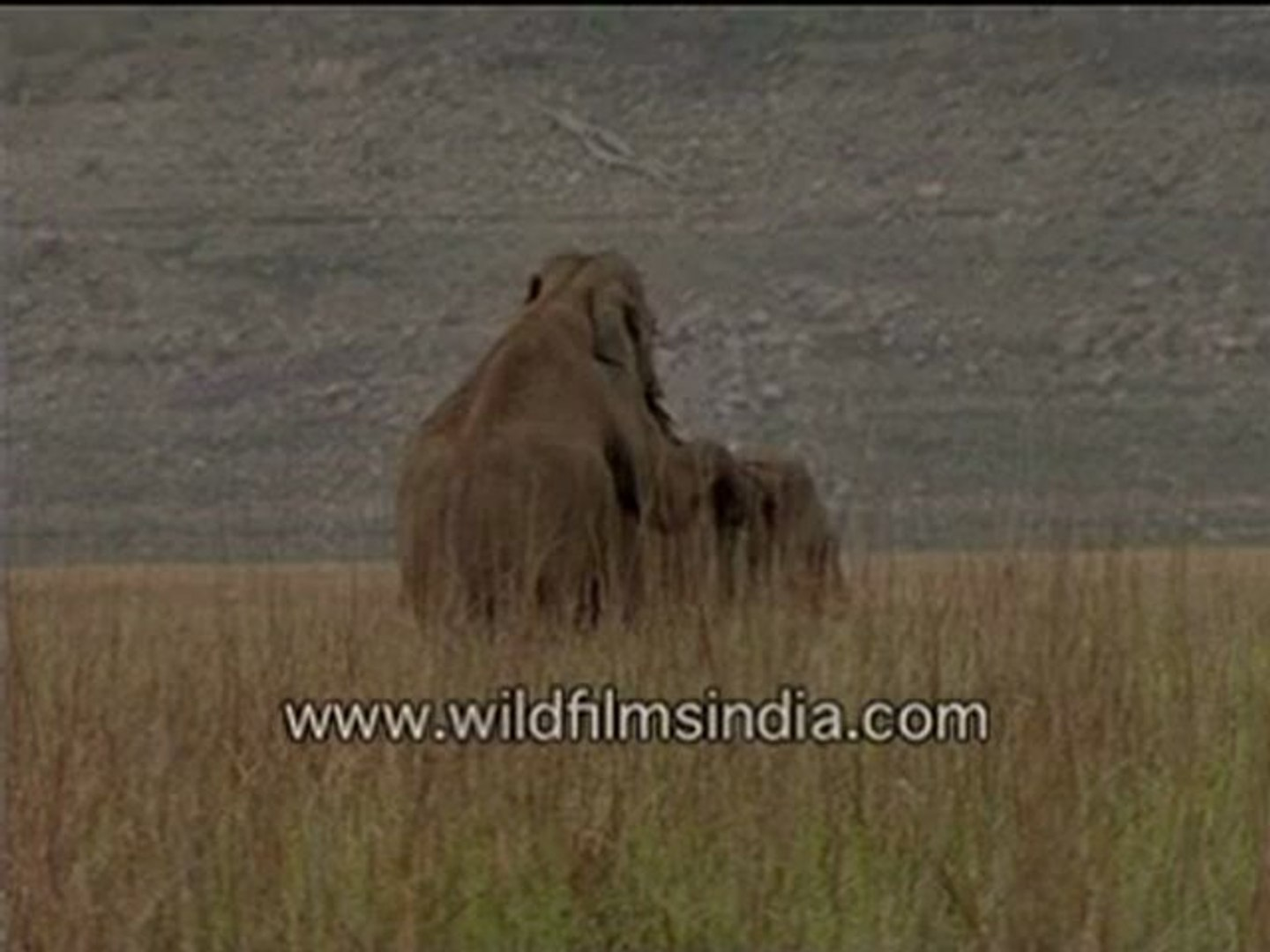 Elephant sex in the Himalayan foothills