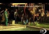 Florida, il cavallo fa un bagno in piscina: salvato dai pompieri. Fuori programma per l'equino: sta bene
