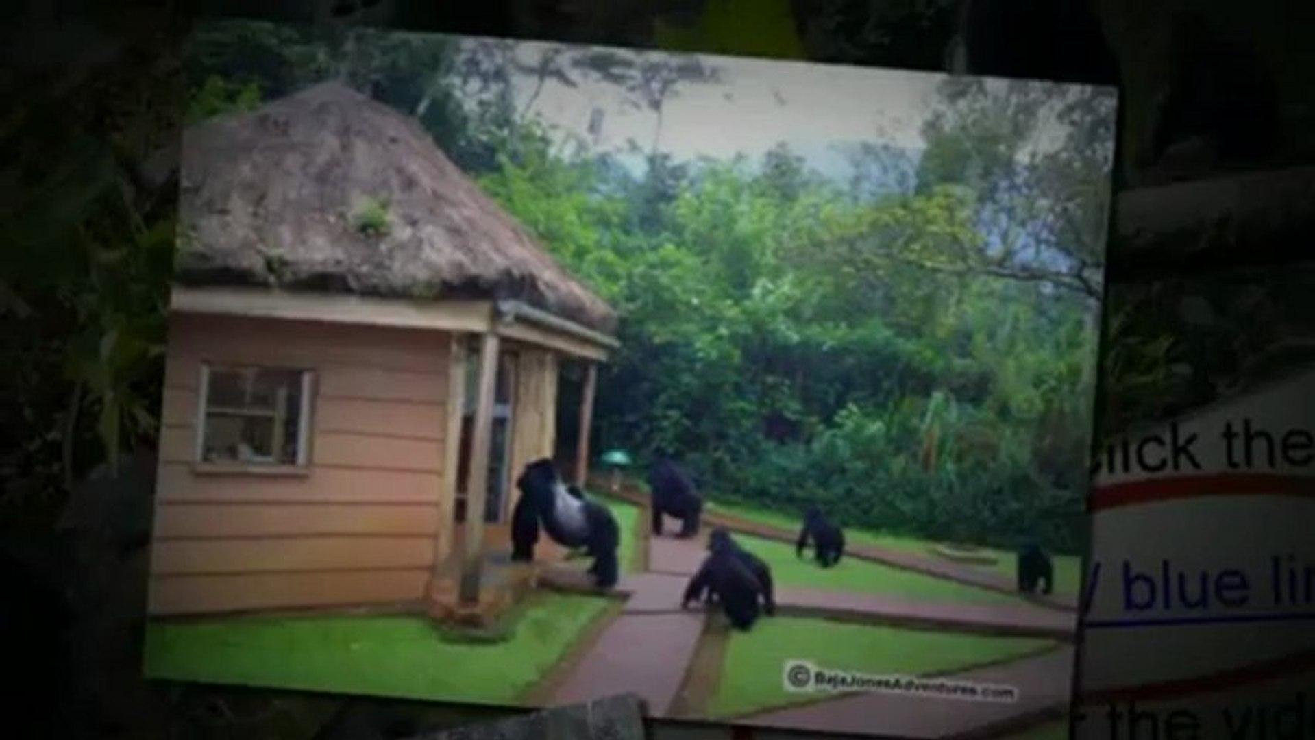 """African Safari"" : Enjoy an Amazing ""African Safari""  (562) 889-4016"