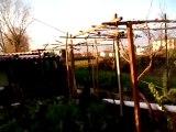 Video bella giornata vista dall'orto