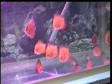 DVDClip6 (2)büyüyorlar,kardeş,f2,red mape,yavru redler,artifical