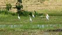 Indonesia-Bali-Rice Field-1.mov