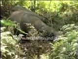 dead elephant 4-MPEG-4 800Kbps Streaming.mp4