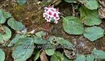 A Wild flower-MPEG-4 800Kbps.mp4