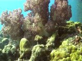 under water-swim over corals 3 .mov