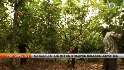 Agriculture : Les terres africaines toujours convoitées