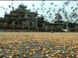 Pigeon eating the scattered grain-MPEG-4 800Kbps.mp4