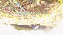 Parapente au Puy-de-Dôme - 08/01/2013