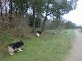 En promenade avec 8 chiens