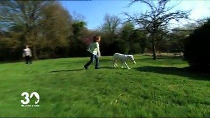 Les enfants et les chiens