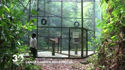 Les gibbons de Bornéo