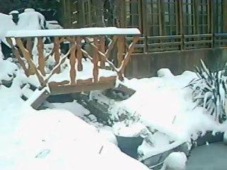 mes deux toutous heureux dans la neige