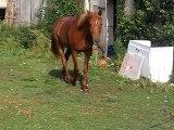 il est trop beau mon cheval!