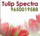 Tulip Spectra # TULIP SPECTRA Gurgaon Sector 104 # Tulip Group