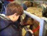 Visite hivernale de la ferme de la Bergerie Nationale de Rambouillet