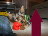 Pet Stores Outlet - Cat Food, Dog Beds, Pet Stores, Carriers, Beds, Treats, and More