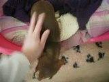 Visite chambre des chiens élevage Des dunes de keremma