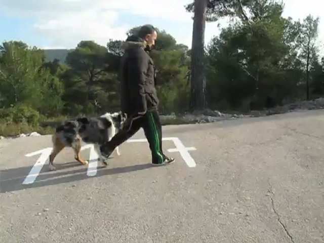 Dressage canine la ciotat : Exercices de base