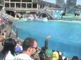 Un ballet d'orques avec leu dresseurs et dresseuses au SeaWorld San Diego