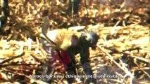 Nouvelle Colonisation - Kolibri